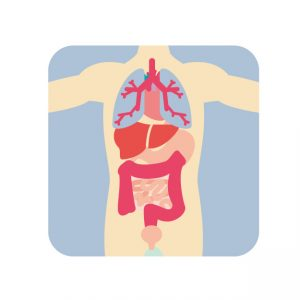 naizou セラピスト向け。体を根本から変える内臓マニピュレーション・頭蓋骨矯正