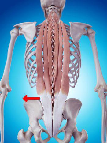 lowerback-pain-1 腰痛の治し方を正しく知る。間違った腰痛ケアの知識は慢性腰痛を長引かせる